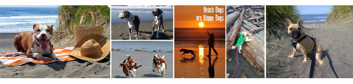 Dogs love the beach!